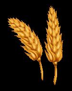 Semillas de trigo fitosanitarios, fertilizantes, semillas certificadasy servicios de compra-venta de cereal